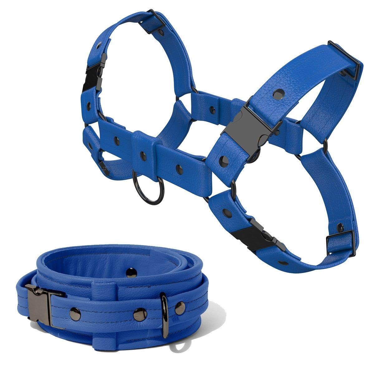 Bulldog Harness + Collar – Standard Leather – Blue - Gun Metal Black Fittings