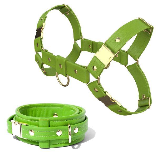 Bulldog Harness + Collar – Standard Leather – Green - Gold Metal Fittings